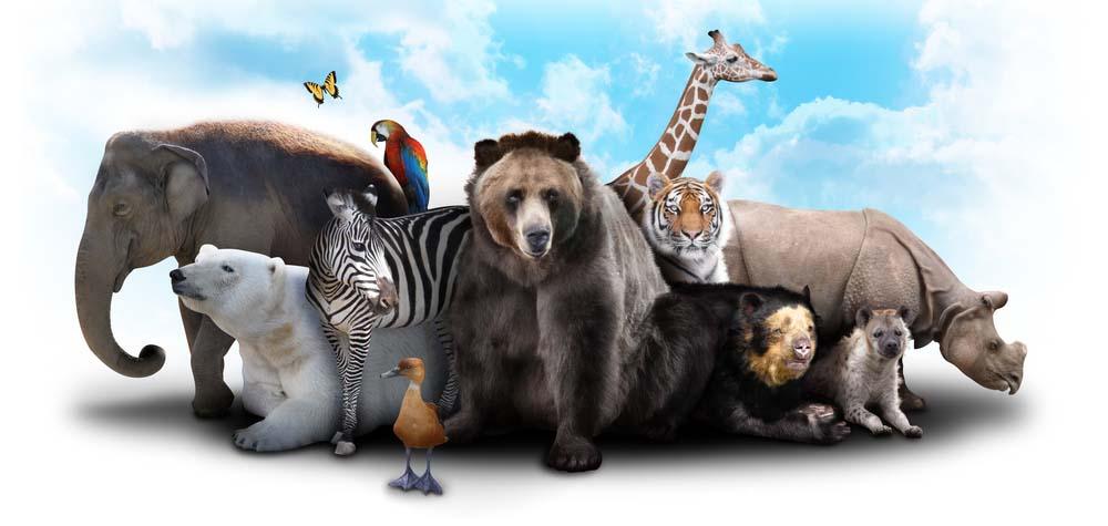 dierentuinen-speeltuinwijzer